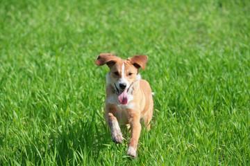 dog in jump