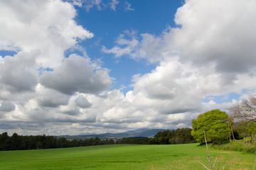 Green fields and blue sky with clouds