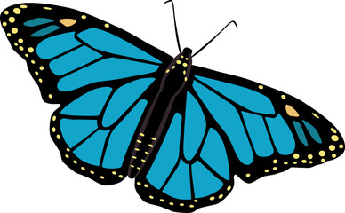 Butterfly vector illustrated on white background