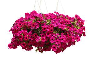 Fototapeta kwiaty, flowers obraz