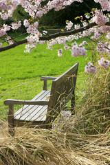 Bank unter'm Kirschbaum - Bench under cherry blossoms