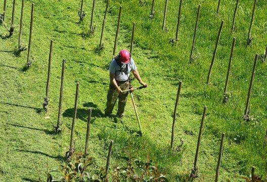 Coupeur d'herbe