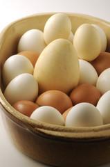 Uova d oca e gallina di varie dimensioni