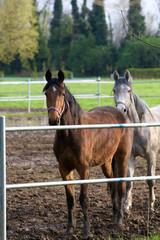 cavalli al paddock 11