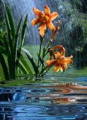 Giglio selvatico sotto la pioggia