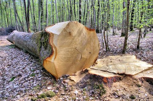 abattage d 39 un arbre en for t photo libre de droits sur la banque d 39 images image. Black Bedroom Furniture Sets. Home Design Ideas