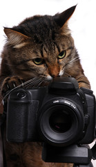 ly_cat_04