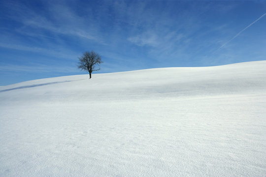 Snowy covered meadow