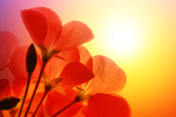 Sticker - Red flowers over sunshine background