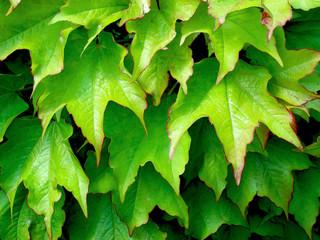 foglie-Feuilles-Leaves 1