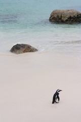 Pinguin am Strand2