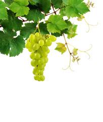 Grapevine with ripe grape