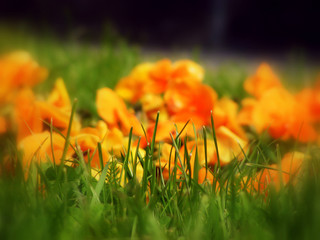orange flowers bounded against grass