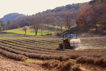 Tractor working on Lavender field, Provence, france