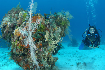 A diver swims around a coral bommie in the Cayman Islands.