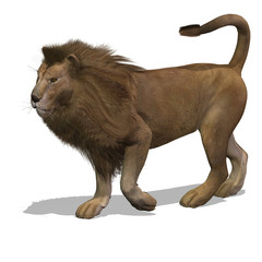 Big Cat Lion Male