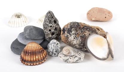 Conchas y piedras