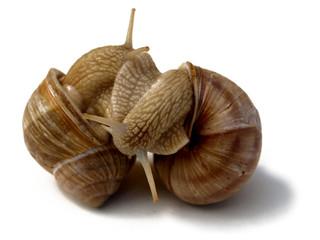 deux escargots