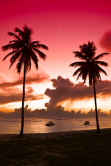 Two black palm on night beach