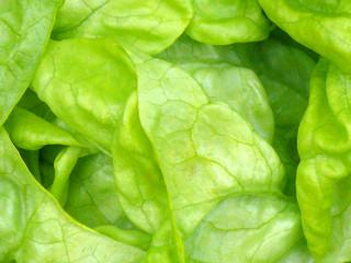 Salat,Makro