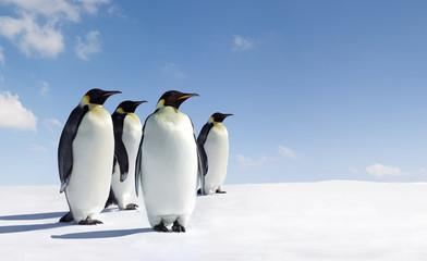 Poster de jardin Antarctique Emperors