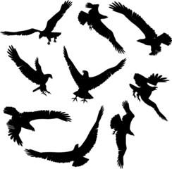 Eagle Silhouettes