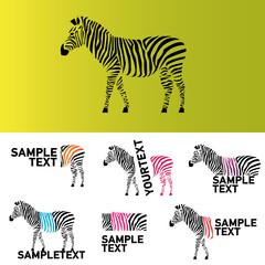 vector zebra illustration
