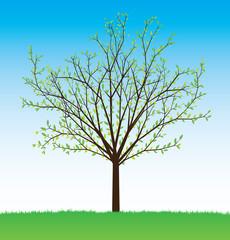 summer vector tree from seasonal set