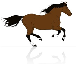 brown vector horse run gallop