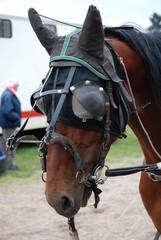 cheval masque
