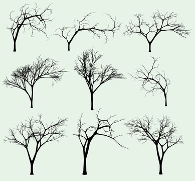 Set of silhouettes of trees