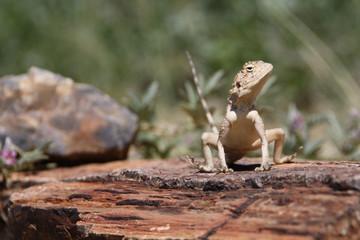 Reptile at sun