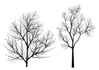 Silhouettes d'arbres (série 1)