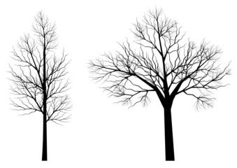 Silhouettes d'arbres (série 3)