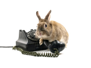 Bunny and telephone