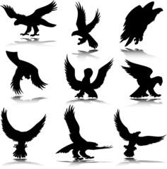 eagle in action illustration
