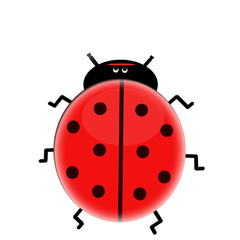 Poster Ladybugs Sweet lady bug isolated on white