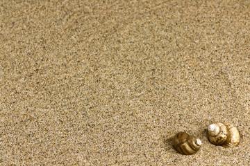 sand and sea shells