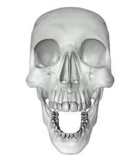 skull tranparent