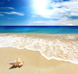 Tranquil scene with Sea shellfish, blue sky, golden sand and small waves