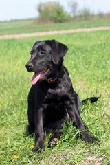 dog sits on a grass