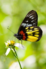 Corlorful Butterfly