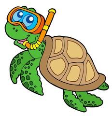 Sea turtle snorkel diver
