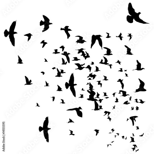 """""""flying Birds Silhouette"""" Stock Image And Royalty-free"""
