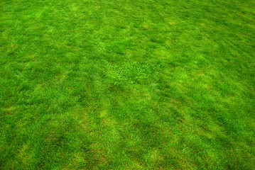Real green  grass texture, bright