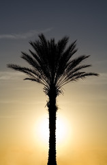 Tropical Palm Tree with Sun Set