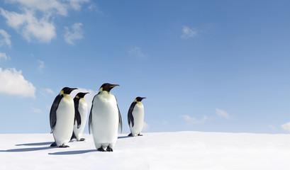 Poster de jardin Antarctique Penguins