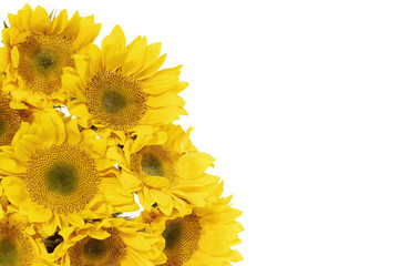 Blank white page decorated with beautiful sunflower