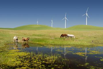 Power Generating Windmills and Livestock