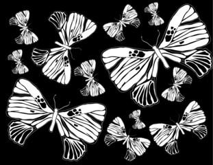 Night buterflies